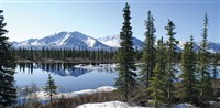 Alaska Discovery Land & Cruise