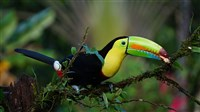 Costa Rica: A World of Nature