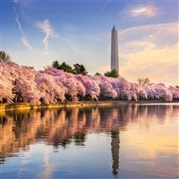 Visit Washington D.C. Tristate Departure