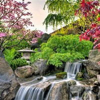 Anderson Japanese Gardens- QC