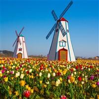 Holland Tulip Festival and Mackinac Island