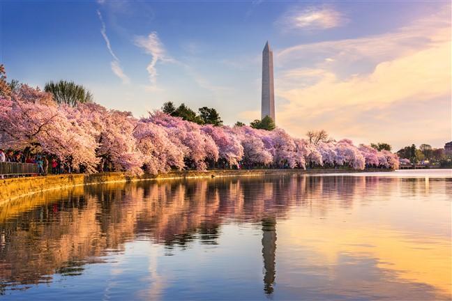 Washington Dc Amp The Cherry Blossom Festival